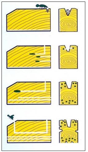 Patología de la madera estructural