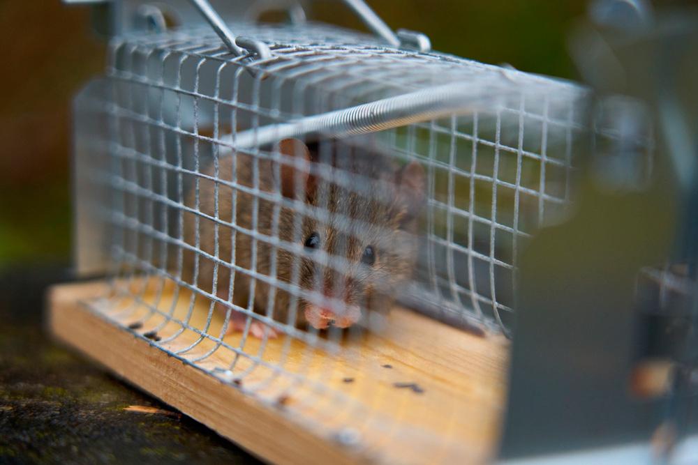 Trampa para ratones