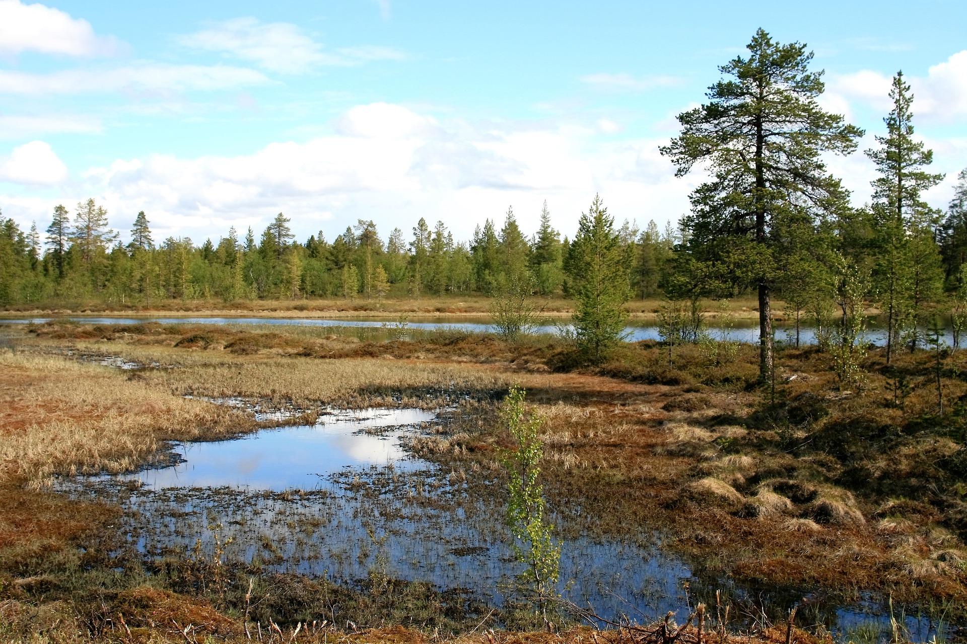 pantano donde proliferan mosquitos