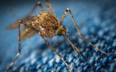 ¿Por qué te pican a ti los mosquitos?